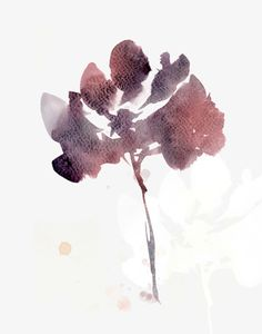 watercolor-flora-martaspendowska-verymarta-marsala