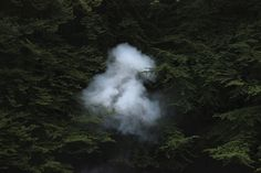 """Martin de Thurah: Wandering Eye_""""Smoke in Trees"""" Smoke was left in the smoke machine on this early Denmark morning. I tried to make a cloud in some trees. This was after we had shot a video for [Danish alt-rock group] Mew. Another all-nighter."""