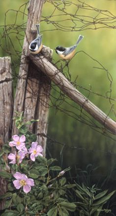 Birds on a country fence Little Birds, Love Birds, Beautiful Birds, Ducks Unlimited Prints, Country Fences, Rustic Fence, Old Fences, Jolie Photo, Wildlife Art