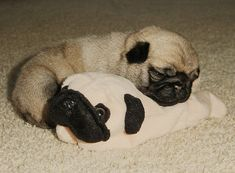 <3!!  This pug puppy is the same size as the pug beanie baby!