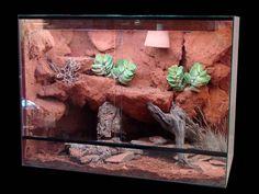 Reptile Decor, Leopard Geckos, Vivarium, Habitats, Cage, Fancy, Diy, Inspiration, Animals