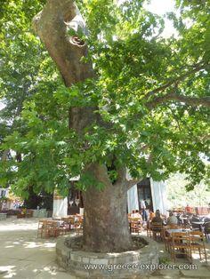 Village Makrinitsa in Mount Pelion Greece, Beautiful Places, Explore, Plants, Self, Plant, Greek, Planting, Exploring
