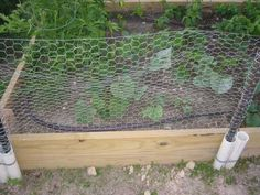 Removeable fence  So that's what I did. I cut the PVC into one foot lengths using a hand saw. I then used some more plumber's strap to strap them onto the garden walls. The t-posts then slip inside the PVC and the chicken wire can be cut a little long, wrapped around the posts, tied on, and you're done.