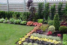 Miniaturowy ogródek - strona 127 - Forum ogrodnicze - Ogrodowisko Taxus Baccata, Beautiful Flowers Garden, Japanese, Plants, Japanese Language, Plant, Planets