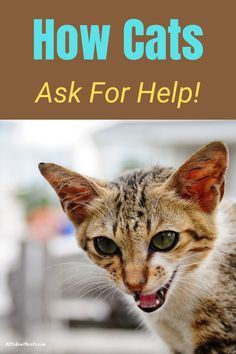 Find out 5 ways your cat asks for help. Even though cats are more subtle than dogs, they know how to get their point across! #catbehaviorexplained #howcatscommunicate Cat Behavior, All About Cats, Ask For Help