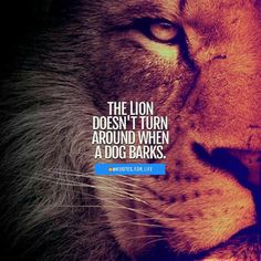 20 Motivational Quotes Brought To You By Big And Powerful Cats - I Can Has Cheezburger? Positive Attitude Quotes, Strong Quotes, Wise Quotes, Words Quotes, Laugh Quotes, Sayings, Leo Quotes, Courage Quotes, Positive Life