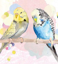 parakeet watercolor