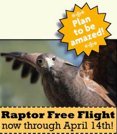 Plan to be amazed - Raptor Free Flight takes off October Arizona Birds, Flight Take Off, Sonora Desert, Natural History Museum, Animal Species, Beautiful Birds, Botanical Gardens, Places To Go, Art Gallery