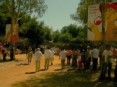 Concurso de Paellas 2013