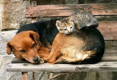 Are These Cats Using Dogs as Pillows or Are the Dogs Using the Cats as Blankets? - Cheezburger