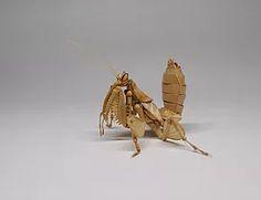 Hymenopus coronatus-03