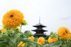 法起寺 by Shin Nara, Flickr ... love the flowers and scene ...