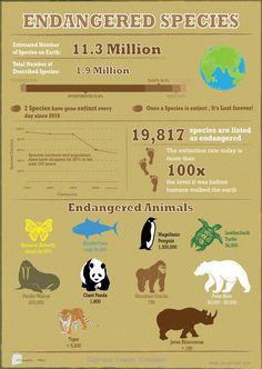 Endangered Species Infographic #infographic #endangered #animal