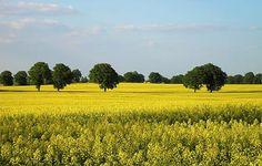 Wielkopolska landscape