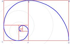 The Golden Ratio applied on the Nautillus shell