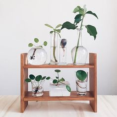 Insta feed obsession: I love this shot they reposted by Plant cuttings are just so dang cute, especially in simple little glass vessels ☺️ via Water Plants, Potted Plants, Garden Plants, Indoor Plants, House Plants Decor, Plant Decor, Decoration Plante, Plant Aesthetic, My New Room