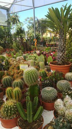 Garden Centre, Fruit, Plants, Fotografia, Plant, Planets