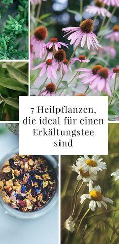 Es gibt wunderbare Heilpflanzen für einen Erkältungstee. Durch die Heilwirkung der verschiedenen Heilpflanzen wird das Immunsystem gestärkt. Der Erkältungstee kann somit sehr wirksam sein. Perfekt, um Erkältung und Grippe ein Schnippchen zu schlagen!