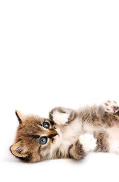 Hello Kitty Images, Fox, Cats, Animals, Gatos, Animales, Animaux, Animal, Cat