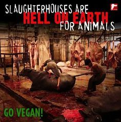 Slaughterhouses Are Hell On Earth For Animals please go #vegan