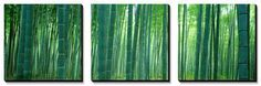 Bamboo Forest, Sagano, Kyoto, Japan Canvas Art Set by Panoramic Images at Art.com