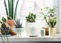Interior garden, plant decor, cacti and succulents, small potted plants, su Green Concept, Living Room Plants Decor, Decor Room, Bedroom Decor, Quirky Bedroom, Gothic Bedroom, Teen Bedroom, Bedroom Sets, Plantas Indoor