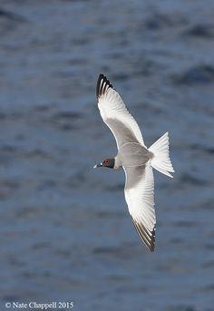 ガラパゴスの鳥写真ツアー