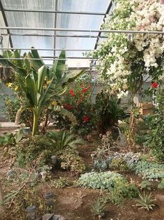 Beautiful Flower Trees and Succulents Inside Jim's Greenhouse