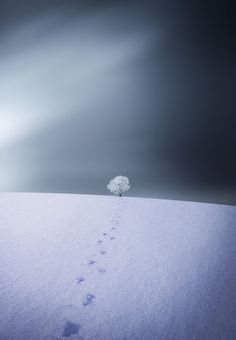 Winter by Bess Hamiti