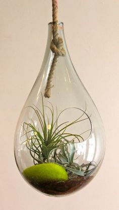 Recycled Glass Hanging Terrarium