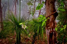 LIGHT IN THE FOREST, Bullimah Point, Maitland Bay, Central Coast, NSW…