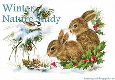 WINTER NATURE STUDY #homeschool #naturestudy @mylearningtable.com