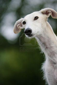 beautiful, looks a bit like our Tobi