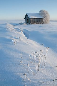 Winter Barn ♥