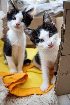 Cats -Katzen
