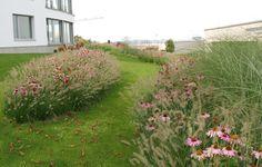 Garten Schindellegi | Trüb für Grün AG Einsiedlerstrasse 499 8810 Horgen T 044 718 48 48 F 044 718 48 49 trueb@trueb-ag.ch Plants, Garden Planning, Plant, Planets