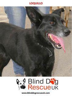 Blind Dog Rescue UK - Adopt a blind dog Dog Rescue Uk, Dog In Spanish, Dog Boarding Near Me, Shipping Crates, Dog Training, Cuddling, Shelter, Adoption, Handsome