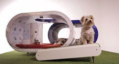 All the comforts of home. The Samsung Dream Doghouse comes with a hot tub, treadmill and food dispenser.