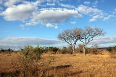 south african landscape - Google Search