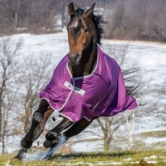 WINTER 2015 NEW COLOURS Fair Price Equestrian | Bucas Freedom Turnout Rugs