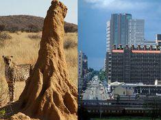 Termite mound inspires a building « inhabitat – green design, innovation, architecture, green building Architecture Design, Green Architecture, Sustainable Architecture, Sustainable Design, Biomimicry Architecture, Building Facade, Green Building, Building Design, Grand Tour