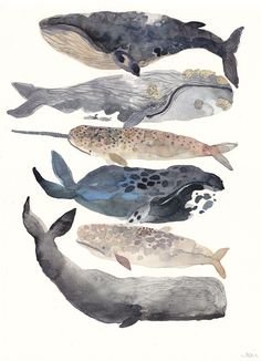 Six Whales Original Watercolor Painting by unitedthread on Etsy