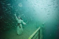 butterflies | andreas franke #photography ( underwater photography exhibition )