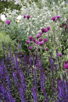 These classy plant combinations from Chelsea Flower Show 2017 really caught our eye - try them at home in your garden!