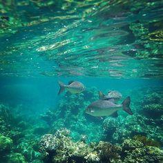#greatbarrierreef #carins #holiday #october2015 #snorkeling @papsjamie #ocean by ol_fedele http://ift.tt/1UokkV2