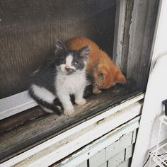 cat photos: in window, on windowsill Crazy Cat Lady, Crazy Cats, Cat Window, Persian Cats, Cat Pin, Through The Window, Nooks, Cat Toys, Windows And Doors