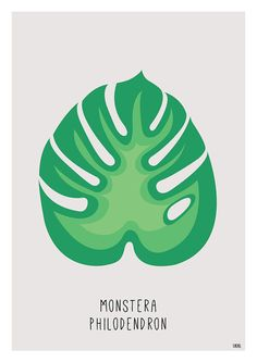 GREY MONSTERA PHILODENDRON poster affiche A4 www.seldeviking.com  https://www.etsy.com/fr/shop/SeldeViking?ref=search_shop_redirect #philodendron #monstera #seldeviking #seldeviking.com #jungle #tropical #feuille #leaf #feuilles #leaves #plant #plante #herbier