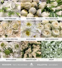 Mayesh Cooler Picks - Fall - Porcelain | top: White sweet peas, white peonies, frilly white tulips | middle: Bridal veil spray rose, white dahlias, Romeo garden rose | bottom: White scabiosa, Liberstar tulips, orlaya