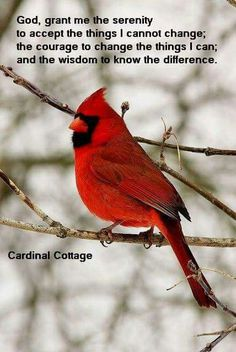Download Cardinals Appear When Angels Are Near Quote Svg Dxf Eps ...