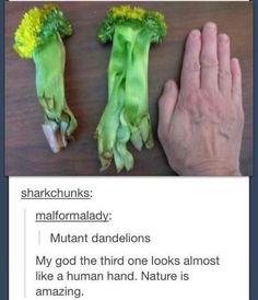 Funny tumblr post.